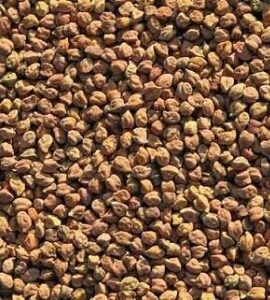 Brown Chickpeas Exporter and Supplier by Radha International