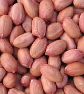 Groundnut Exporter and Supplier by Radha International